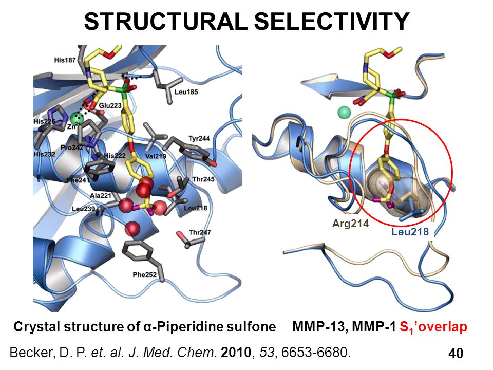 STRUCTURAL SELECTIVITY Becker, D. P. et. al. J. Med. Chem. 2010, 53, 6653-6680. 40 Crystal structure of α-Piperidine sulfoneMMP-13, MMP-1 S 1 'overlap
