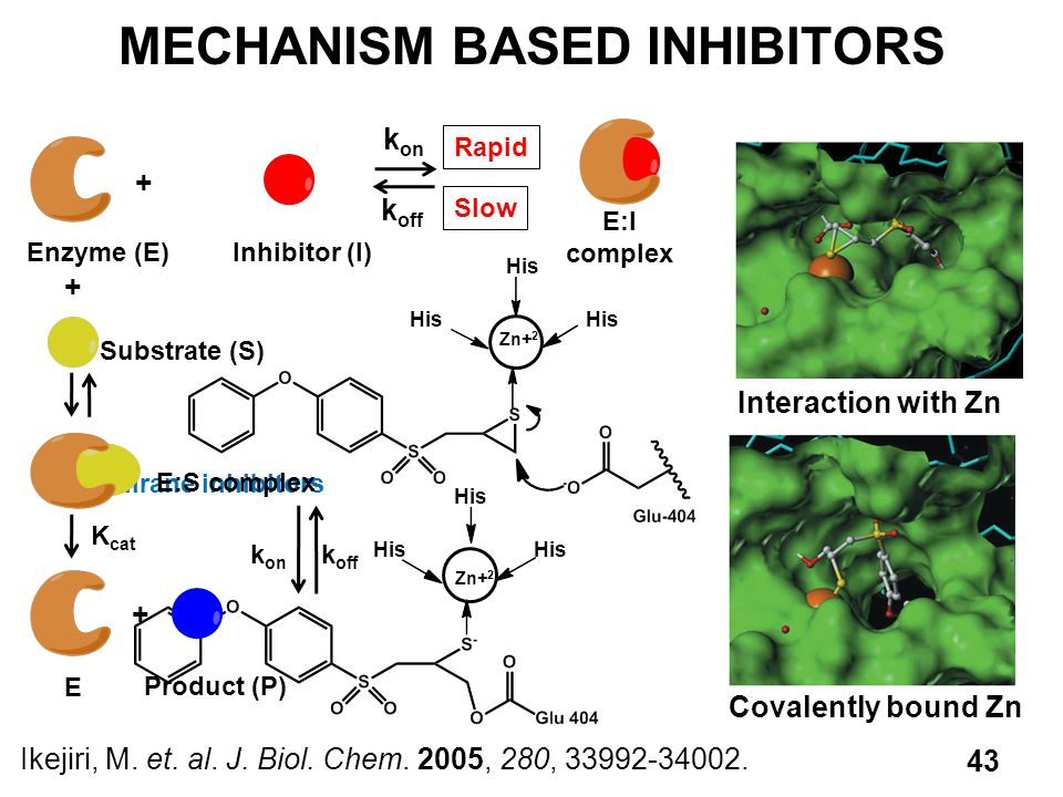 Zn+ 2 His Thiirane inhibitors MECHANISM BASED INHIBITORS Ikejiri, M.