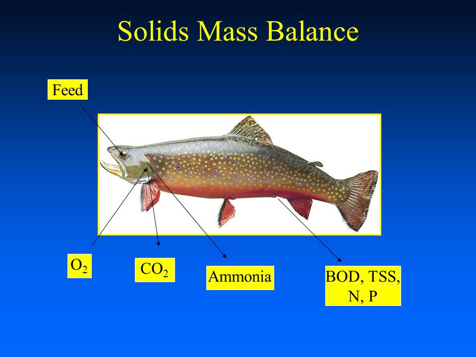 Solids Mass Balance Feed O2O2 CO 2 AmmoniaBOD, TSS, N, P