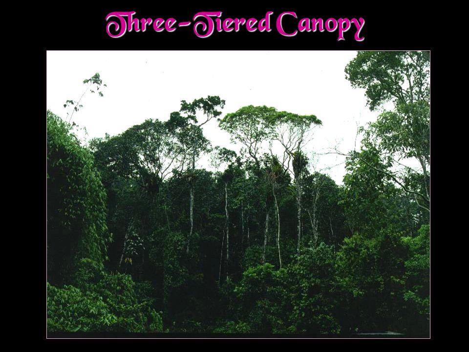 Three-Tiered Canopy
