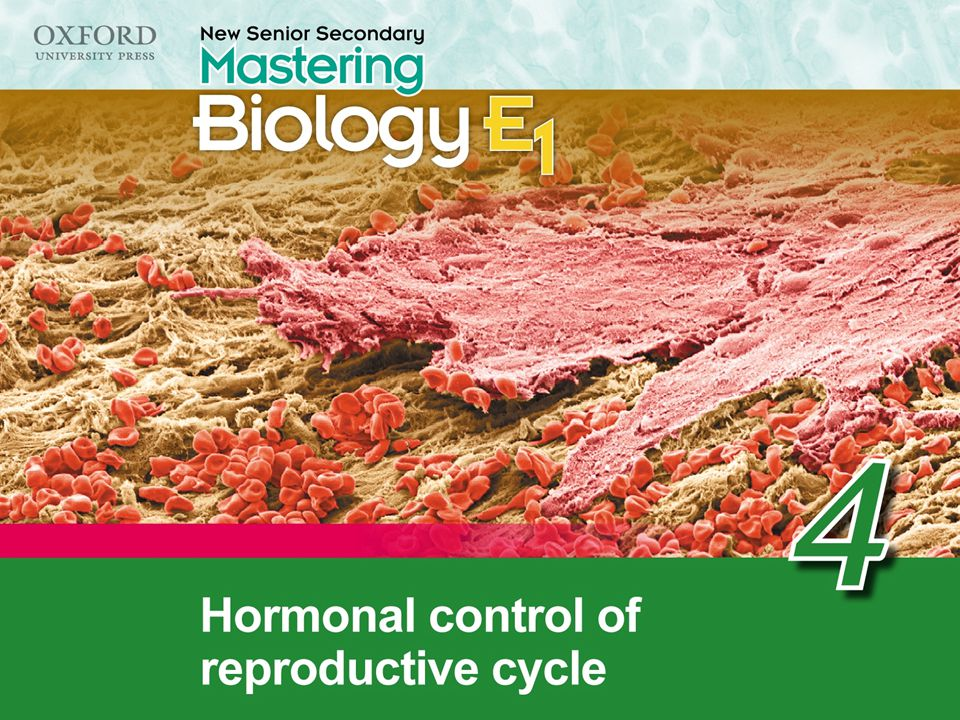 21 4.1 Hormonal control of the menstrual cycle pituitary gland  follicle develops ovary