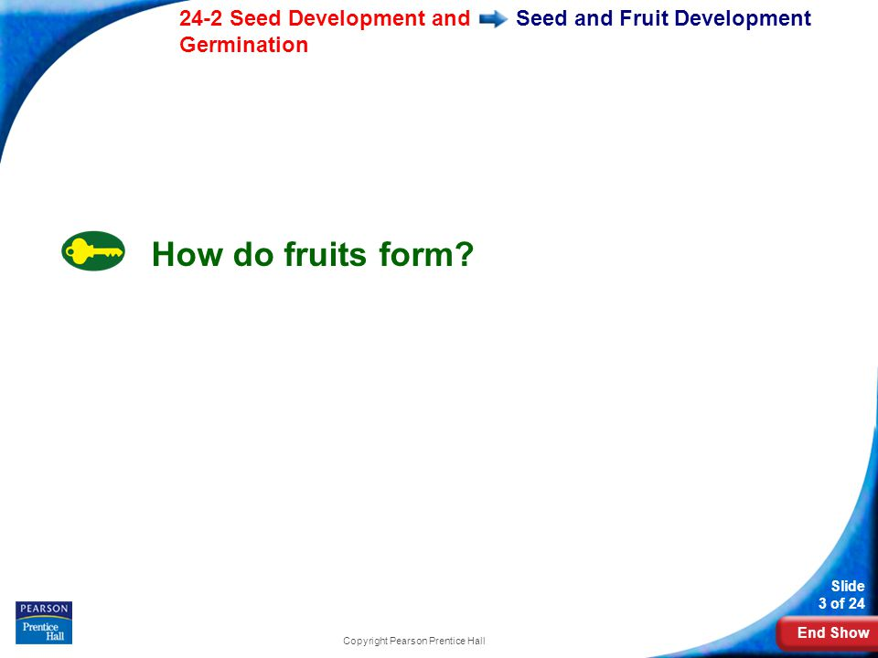 End Show 24-2 Seed Development and Germination Slide 3 of 24 Copyright Pearson Prentice Hall Seed and Fruit Development How do fruits form?