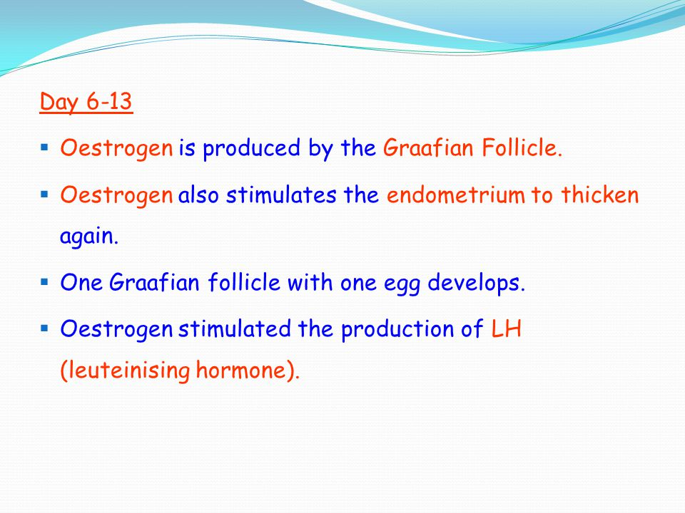Day 6-13  Oestrogen is produced by the Graafian Follicle.  Oestrogen also stimulates the endometrium to thicken again.  One Graafian follicle with
