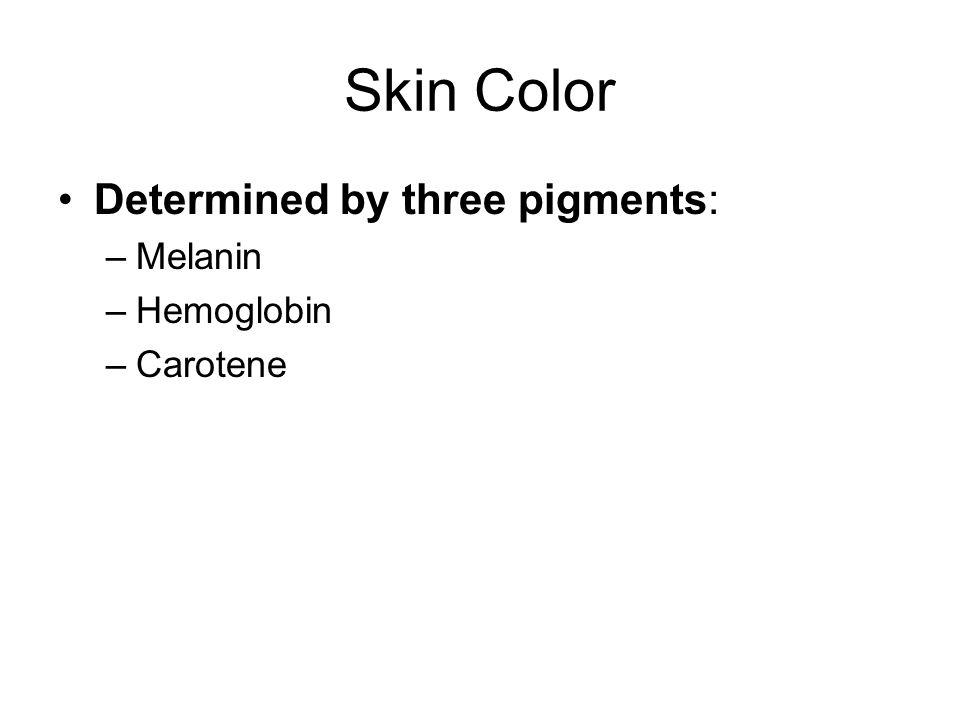 Skin Color Determined by three pigments: –Melanin –Hemoglobin –Carotene