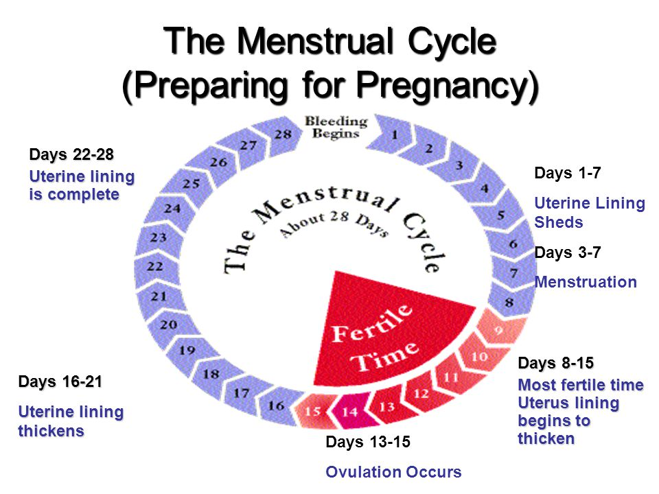 The Menstrual Cycle (Preparing for Pregnancy) Days 1-7 Uterine Lining Sheds Days 3-7 Menstruation Days 8-15 Most fertile time Uterus lining begins to