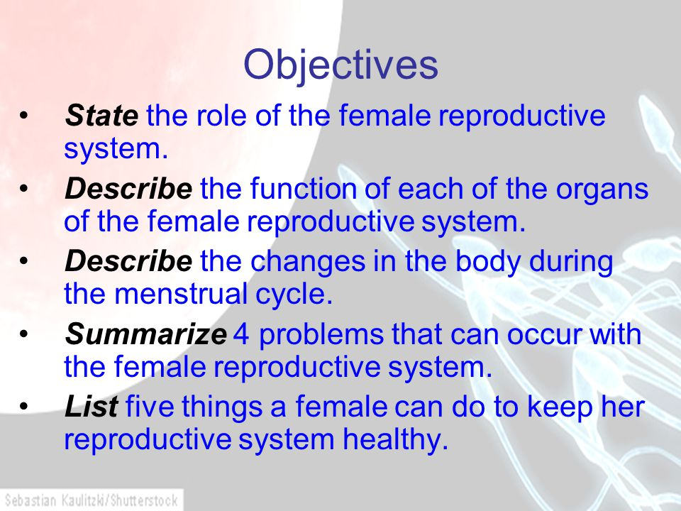 Objectives State the role of the female reproductive system. Describe the function of each of the organs of the female reproductive system. Describe t