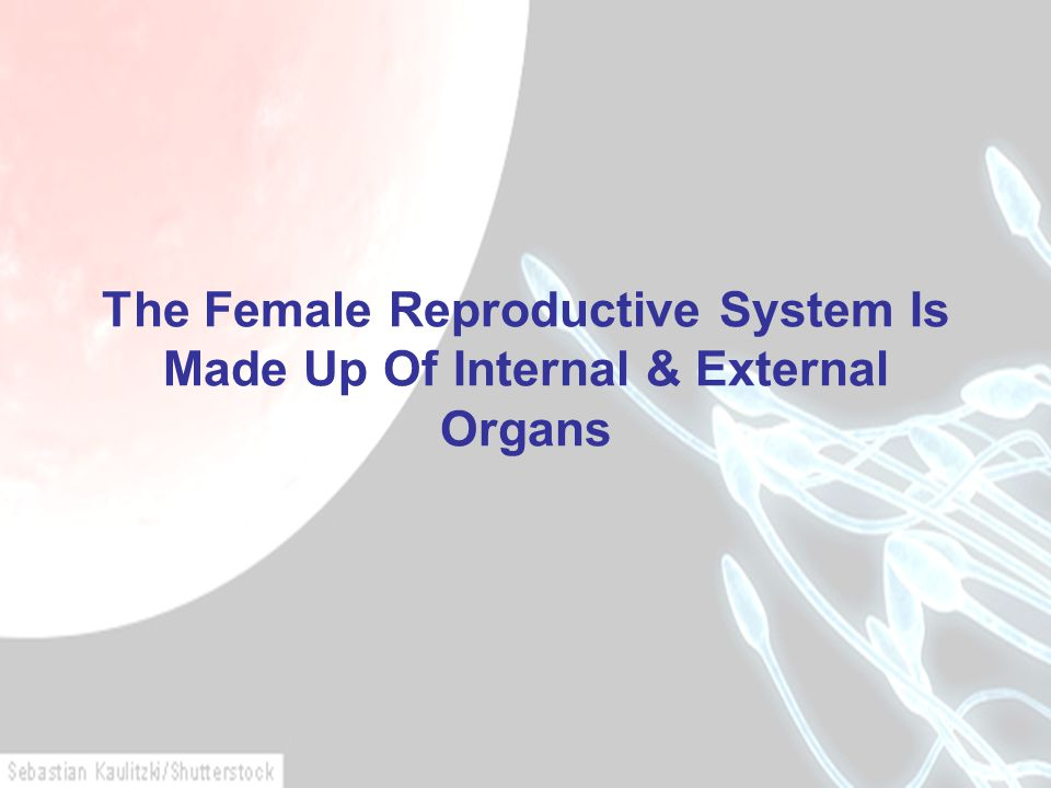 The Female Reproductive System Is Made Up Of Internal & External Organs