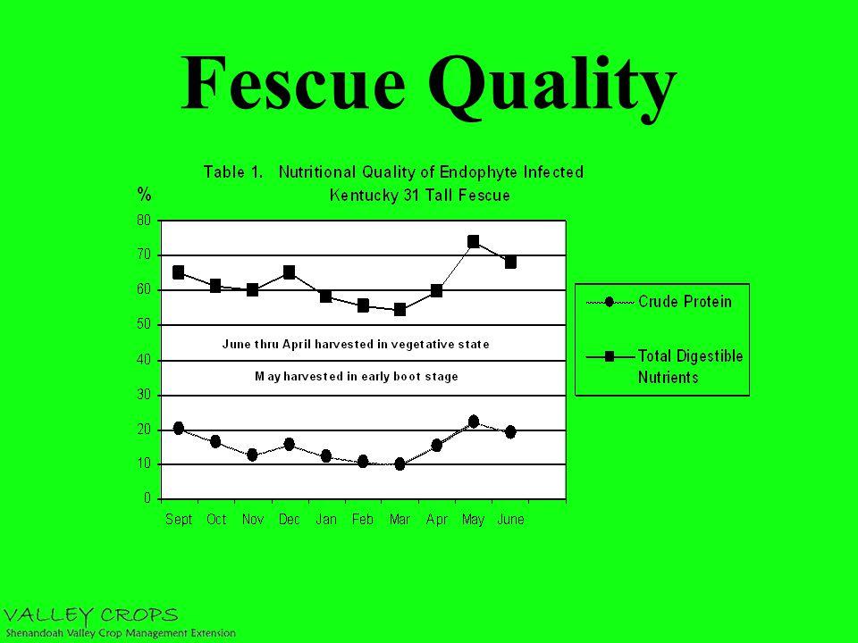 Fescue Quality