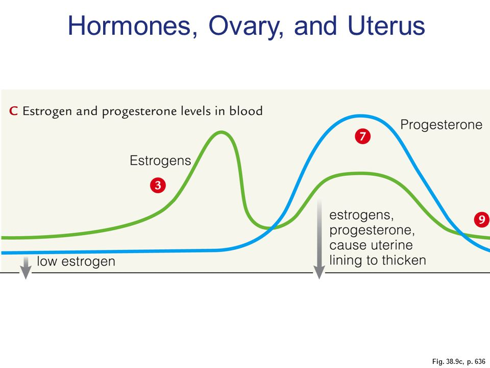 Fig. 38.9c, p. 636 Hormones, Ovary, and Uterus