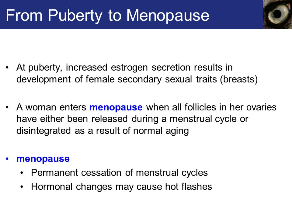 From Puberty to Menopause At puberty, increased estrogen secretion results in development of female secondary sexual traits (breasts) A woman enters menopause when all follicles in her ovaries have either been released during a menstrual cycle or disintegrated as a result of normal aging menopause Permanent cessation of menstrual cycles Hormonal changes may cause hot flashes