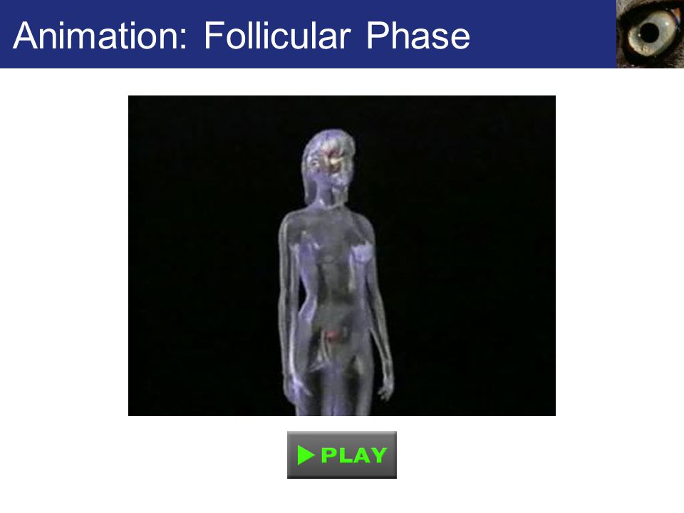Animation: Follicular Phase