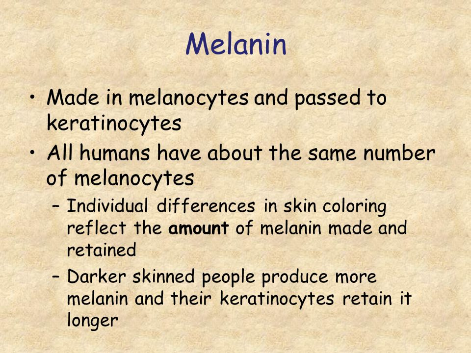 Melanin Made in melanocytes and passed to keratinocytes All humans have about the same number of melanocytes –Individual differences in skin coloring