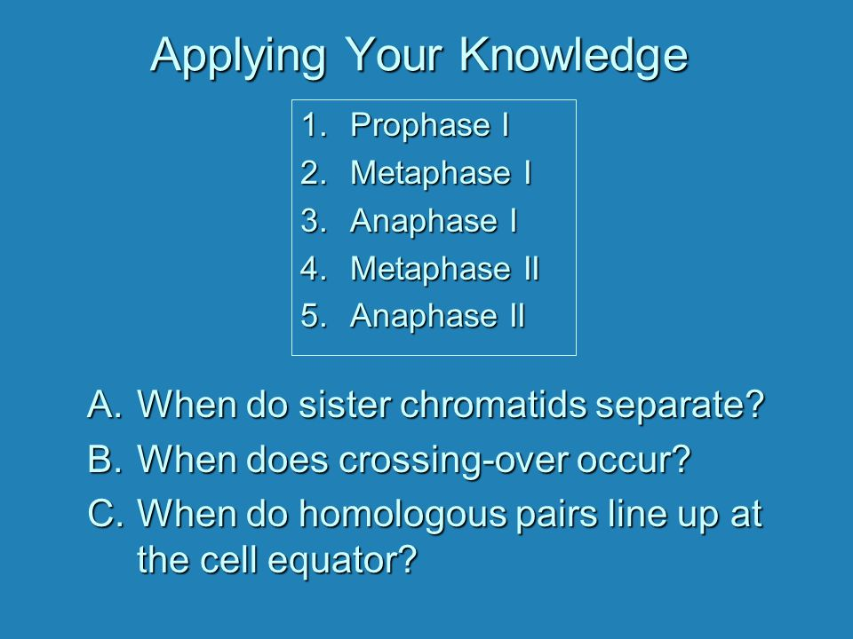Applying Your Knowledge A.When do sister chromatids separate.