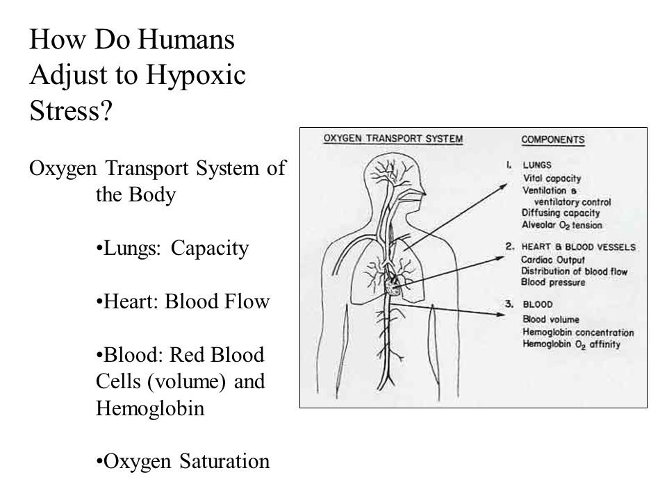 How Do Humans Adjust to Hypoxic Stress.