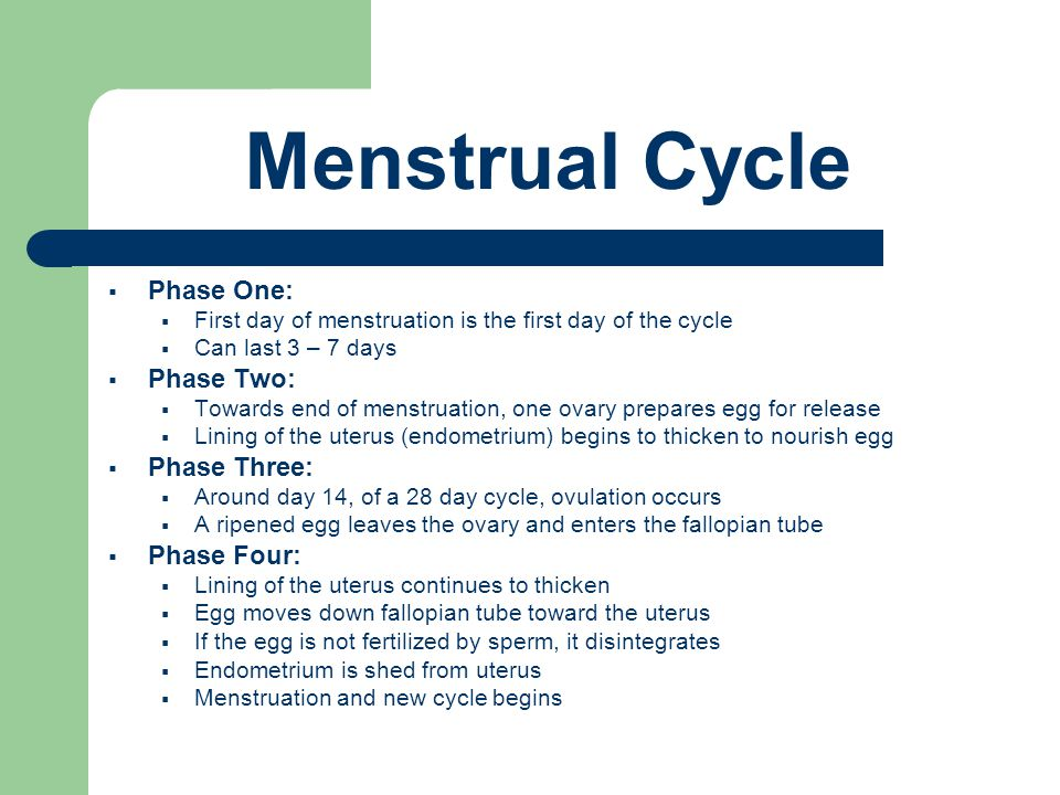 Menstrual Cycle  Phase One:  First day of menstruation is the first day of the cycle  Can last 3 – 7 days  Phase Two:  Towards end of menstruation, one ovary prepares egg for release  Lining of the uterus (endometrium) begins to thicken to nourish egg  Phase Three:  Around day 14, of a 28 day cycle, ovulation occurs  A ripened egg leaves the ovary and enters the fallopian tube  Phase Four:  Lining of the uterus continues to thicken  Egg moves down fallopian tube toward the uterus  If the egg is not fertilized by sperm, it disintegrates  Endometrium is shed from uterus  Menstruation and new cycle begins