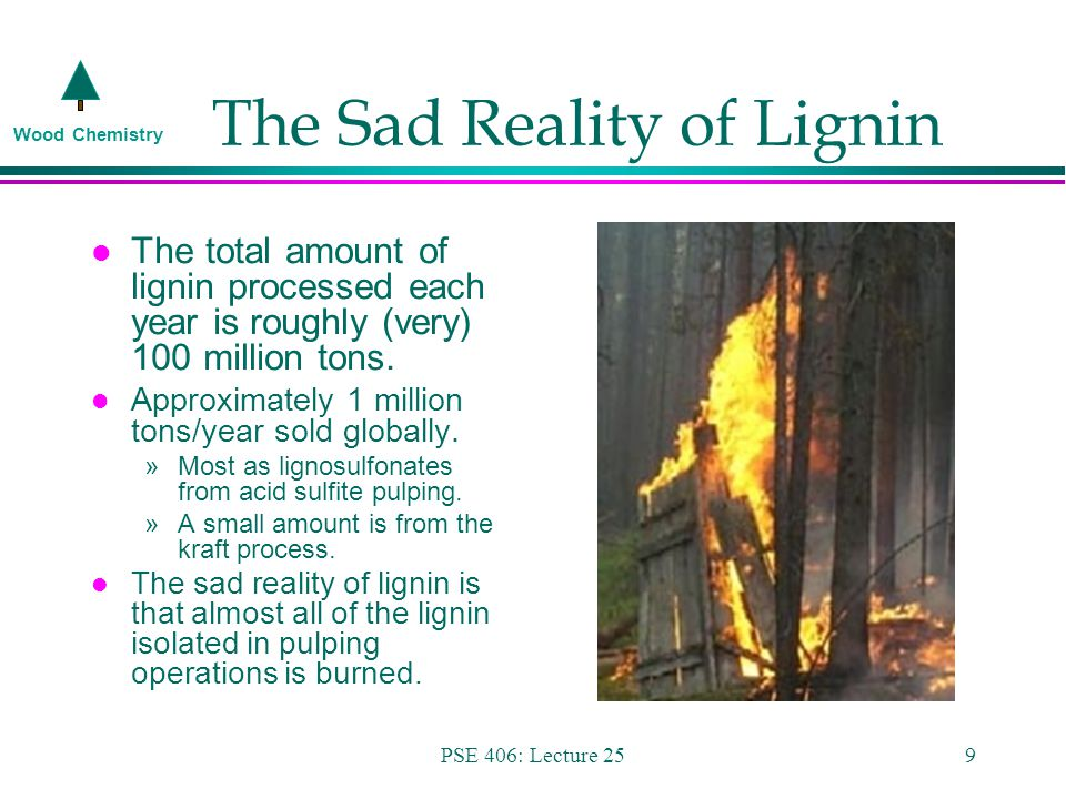 Wood Chemistry PSE 406: Lecture 259 The Sad Reality of Lignin l The total amount of lignin processed each year is roughly (very) 100 million tons.