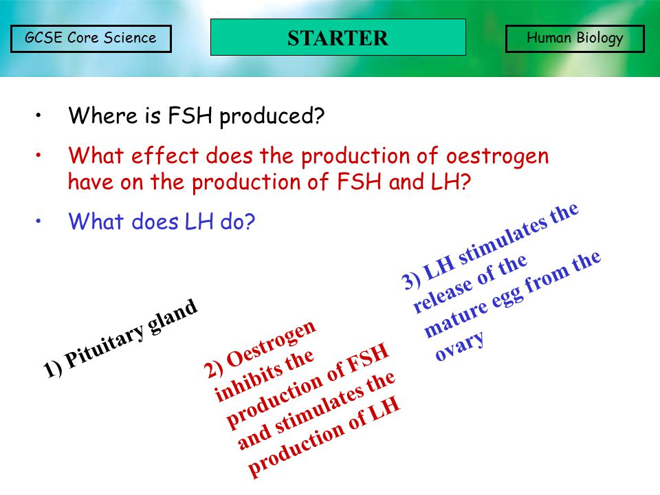 GCSE Core ScienceHuman Biology Where is FSH produced? What effect does the production of oestrogen have on the production of FSH and LH? What does LH