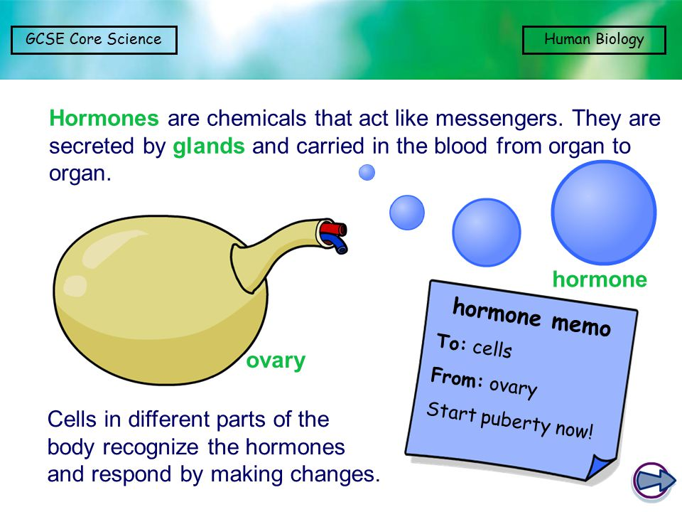 GCSE Core ScienceHuman Biology Cells in different parts of the body recognize the hormones and respond by making changes. hormone memo To: cells From: