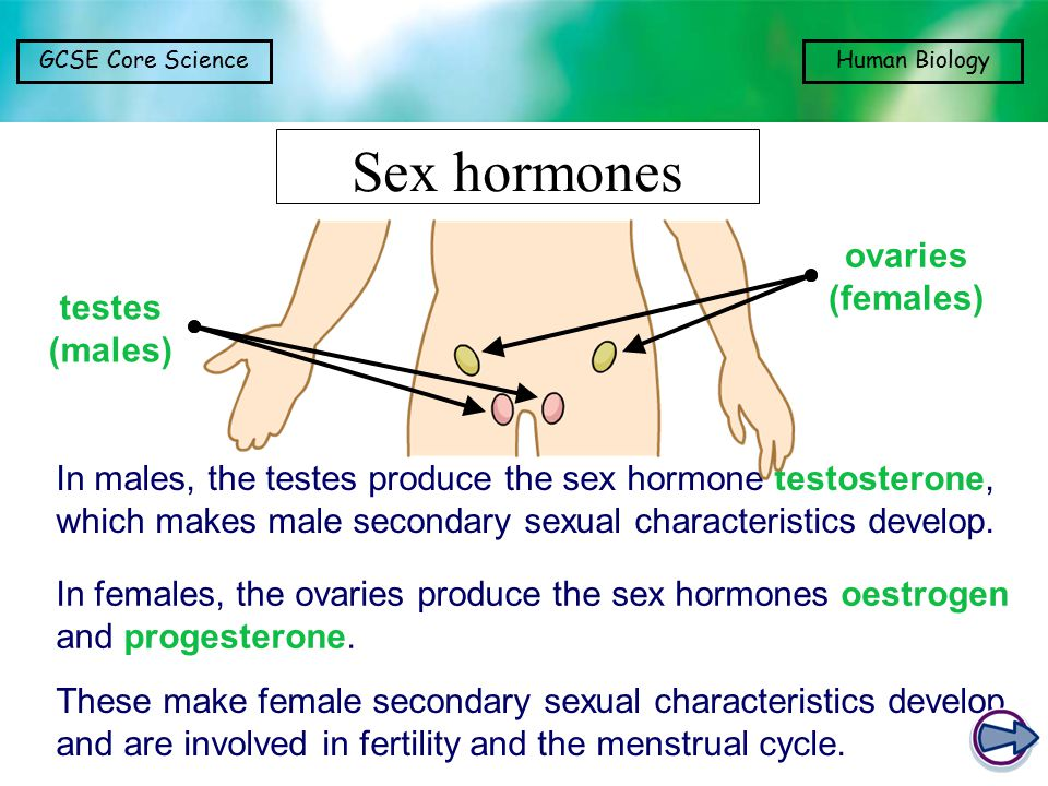 GCSE Core ScienceHuman Biology Sex hormones In males, the testes produce the sex hormone testosterone, which makes male secondary sexual characteristics develop.