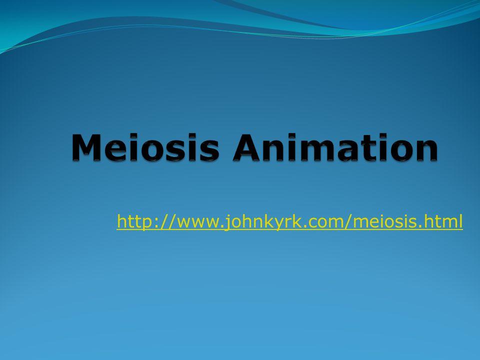 http://www.johnkyrk.com/meiosis.html