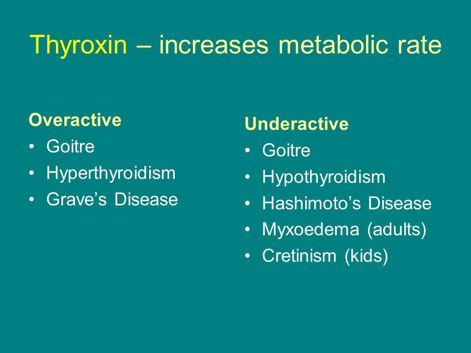 Thyroxin – increases metabolic rate Overactive Goitre Hyperthyroidism Grave's Disease Underactive Goitre Hypothyroidism Hashimoto's Disease Myxoedema