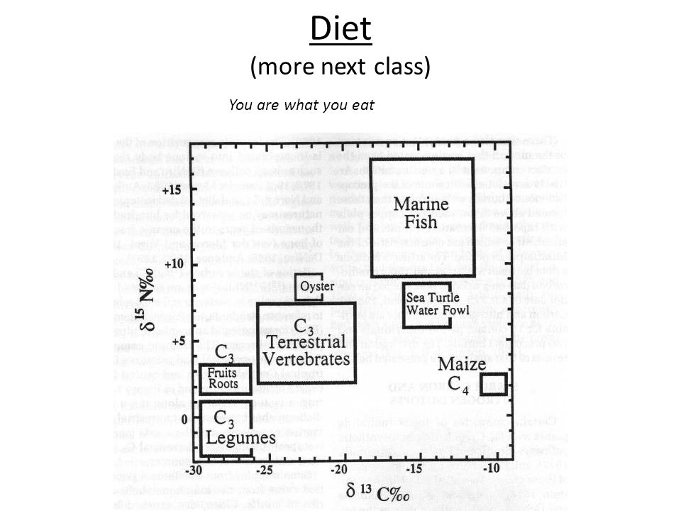Diet (more next class) You are what you eat