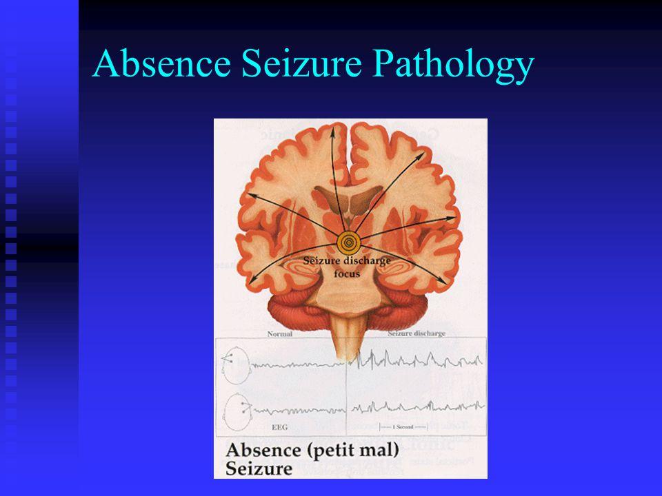 Absence Seizure Pathology