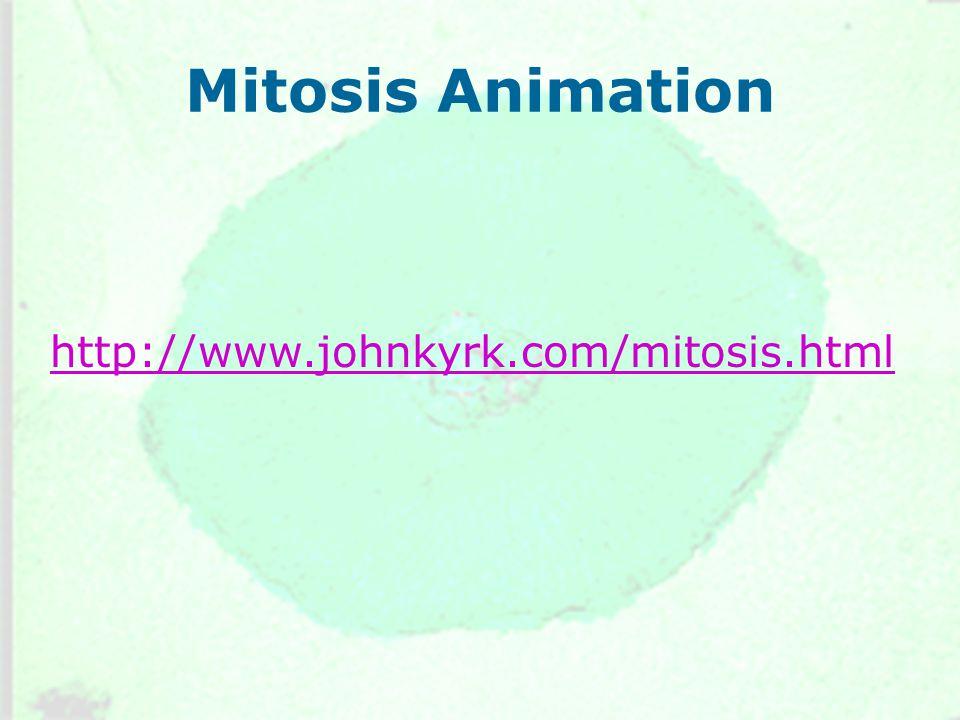 Mitosis Animation http://www.johnkyrk.com/mitosis.html