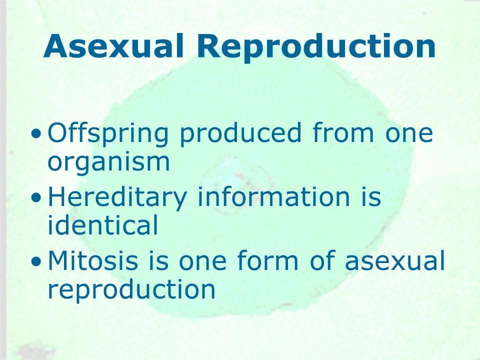 Asexual Reproduction Offspring produced from one organism Hereditary information is identical Mitosis is one form of asexual reproduction