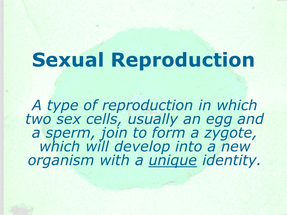 Sexual Reproduction A type of reproduction in which two sex cells, usually an egg and a sperm, join to form a zygote, which will develop into a new organism with a unique identity.