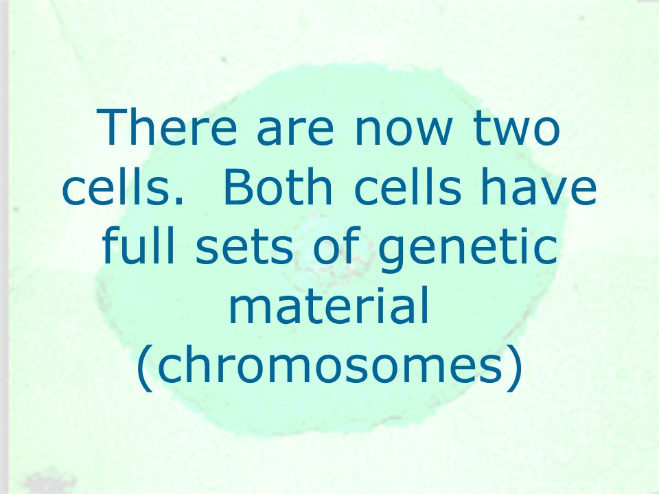 There are now two cells. Both cells have full sets of genetic material (chromosomes)