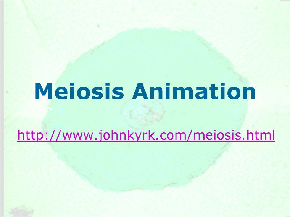Meiosis Animation http://www.johnkyrk.com/meiosis.html