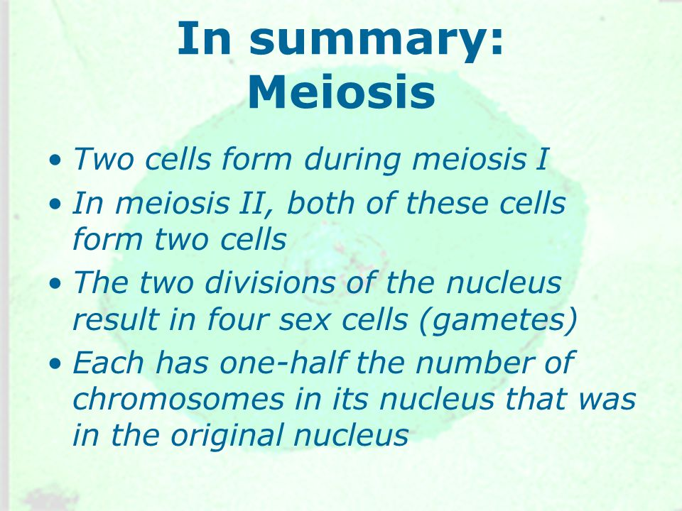 In summary: Meiosis Two cells form during meiosis I In meiosis II, both of these cells form two cells The two divisions of the nucleus result in four