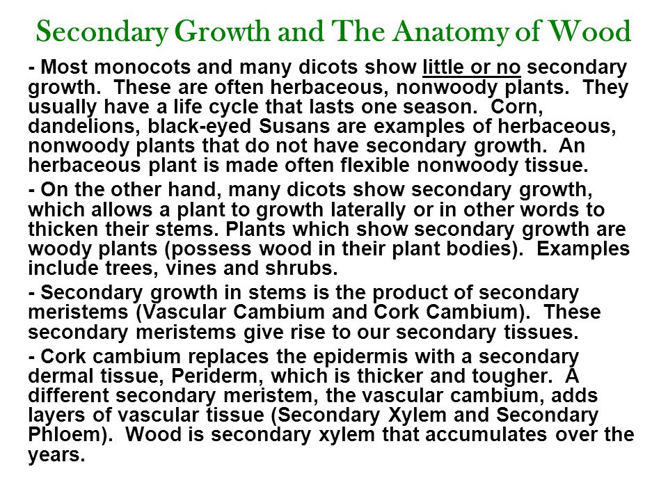 Secondary Growth and The Anatomy of Wood - Most monocots and many dicots show little or no secondary growth.