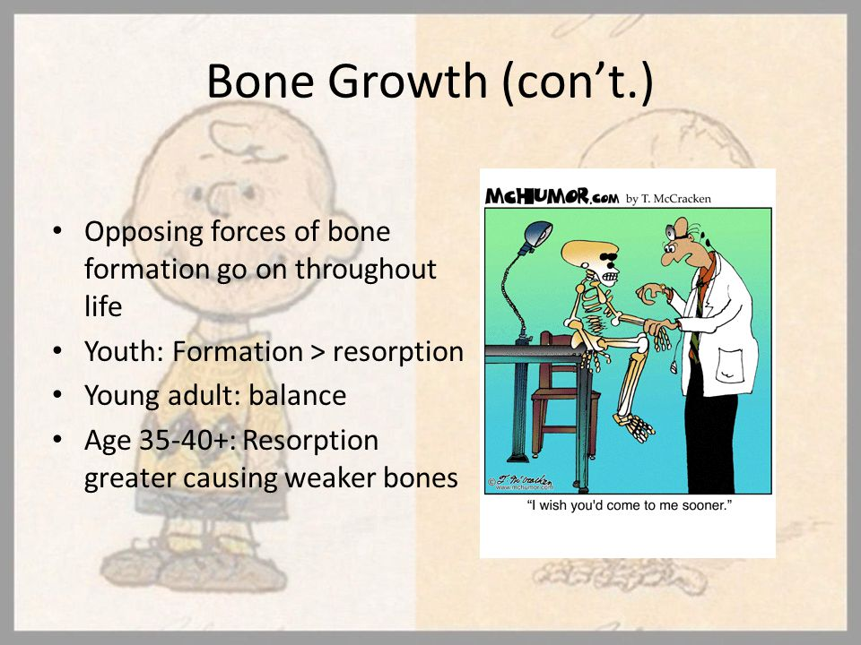 Bone Growth (con't.) Opposing forces of bone formation go on throughout life Youth: Formation > resorption Young adult: balance Age 35-40+: Resorption