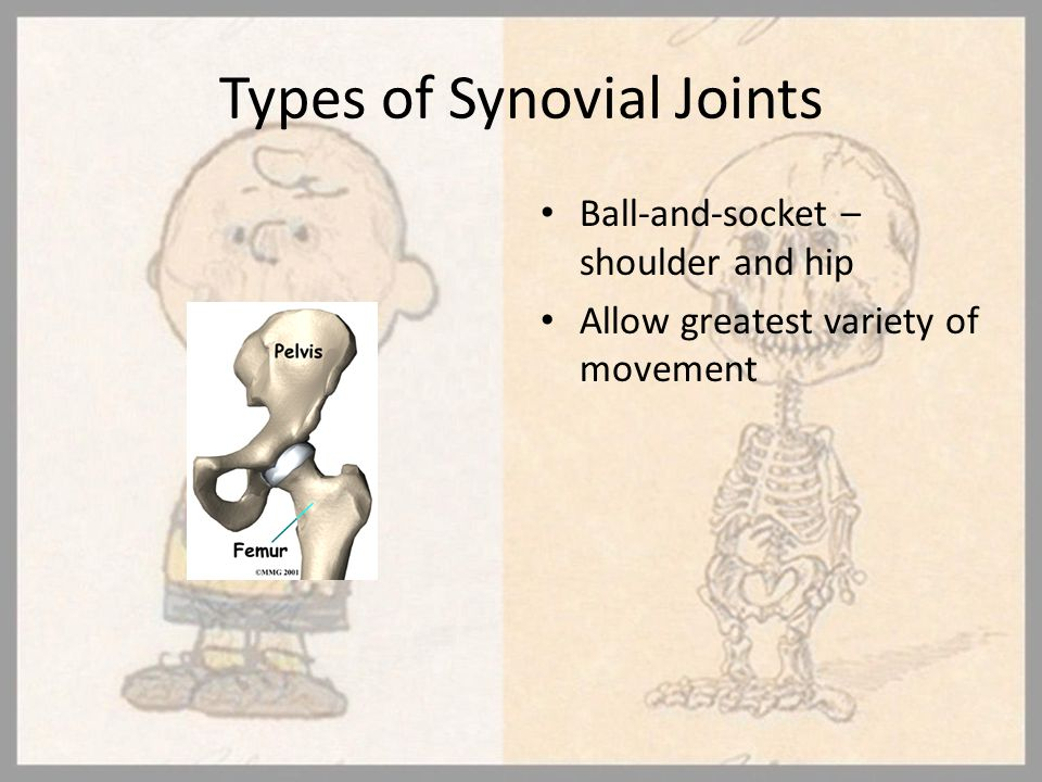 Types of Synovial Joints Ball-and-socket – shoulder and hip Allow greatest variety of movement