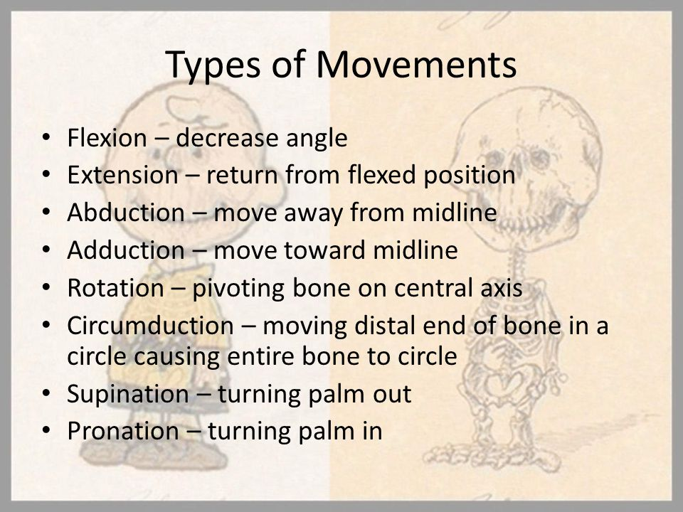 Types of Movements Flexion – decrease angle Extension – return from flexed position Abduction – move away from midline Adduction – move toward midline
