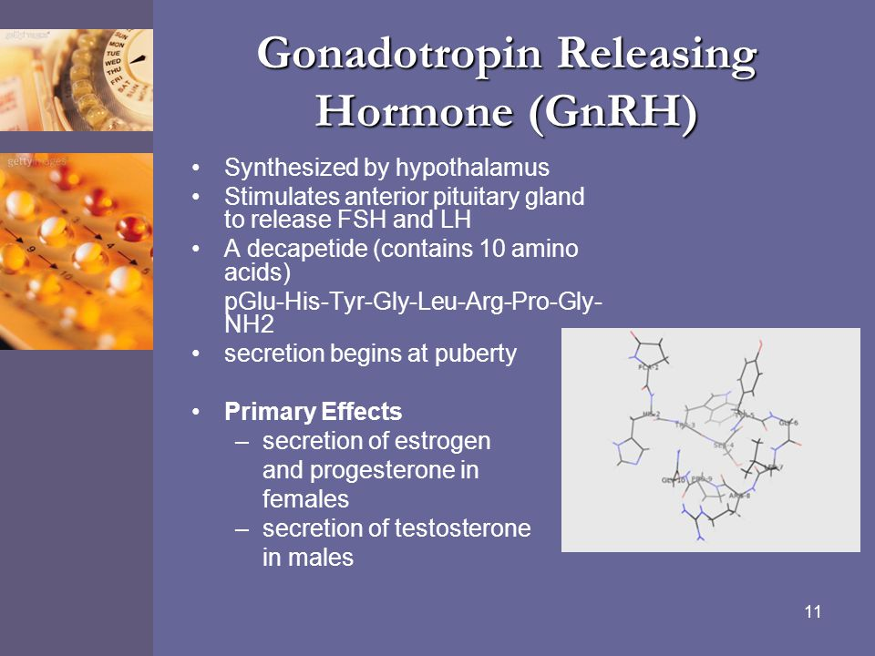 11 Gonadotropin Releasing Hormone (GnRH) Synthesized by hypothalamus Stimulates anterior pituitary gland to release FSH and LH A decapetide (contains