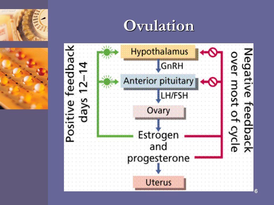 6 Ovulation