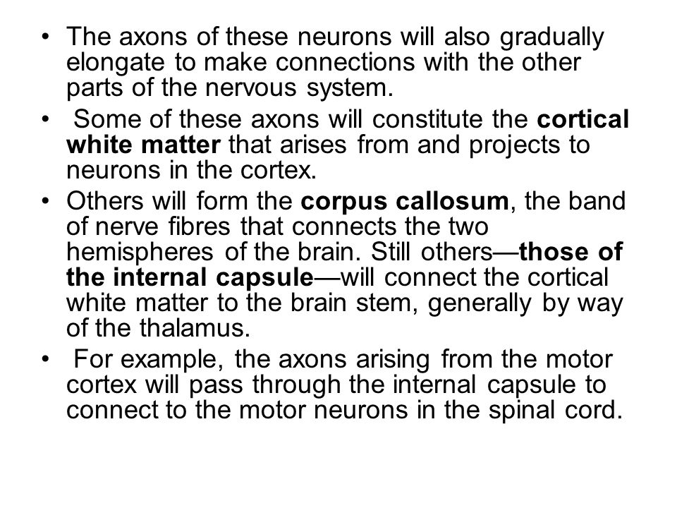 The axons of these neurons will also gradually elongate to make connections with the other parts of the nervous system. Some of these axons will const