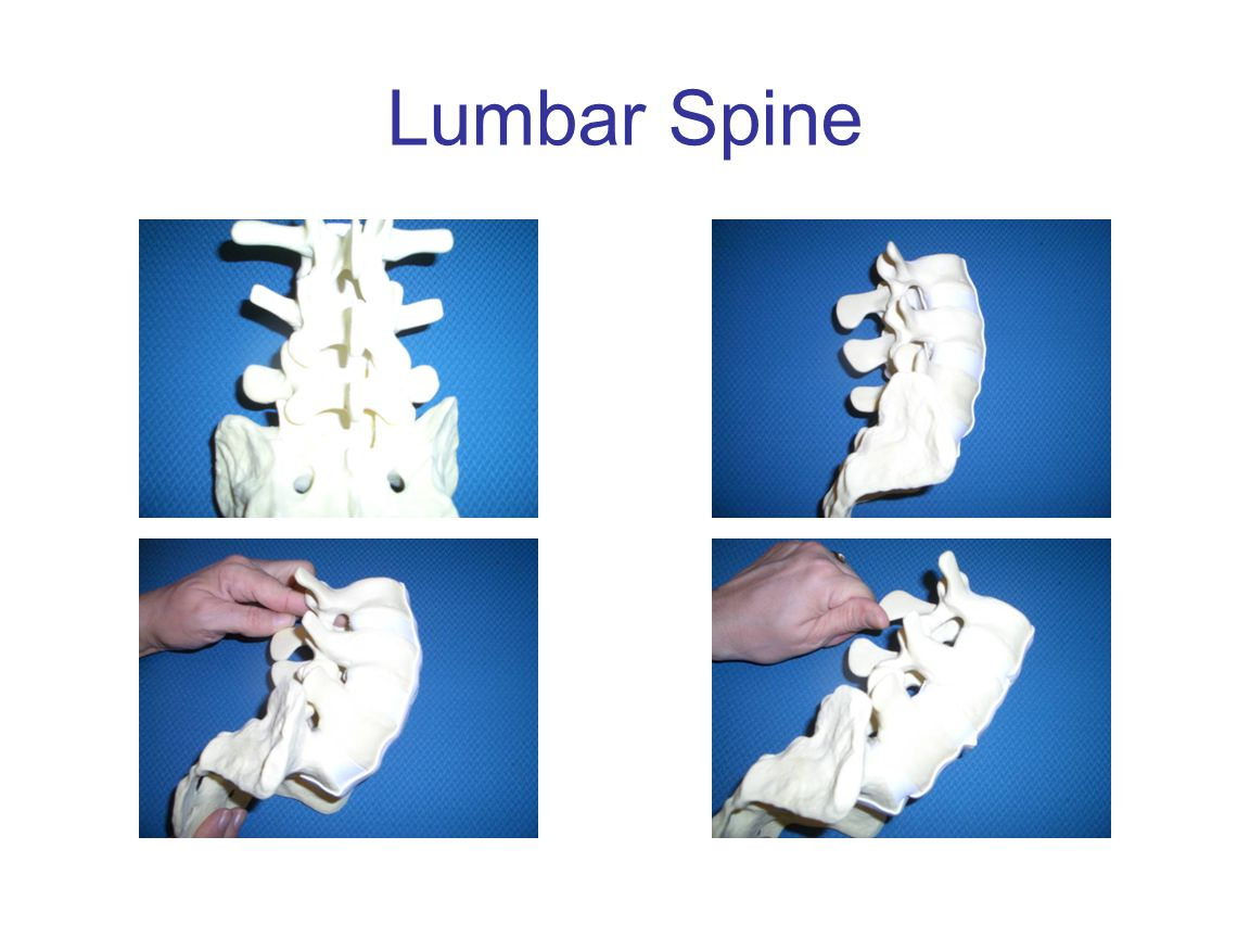 Understanding your spine: Helpful Terms Spinous Process Interspinous space Vertebra Disc Lumbar Spine (L1-L5) Anatomy of the Spine
