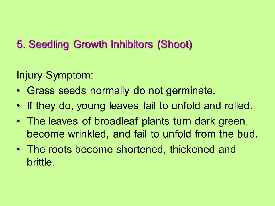 5. Seedling Growth Inhibitors (Shoot) Injury Symptom: Grass seeds normally do not germinate.