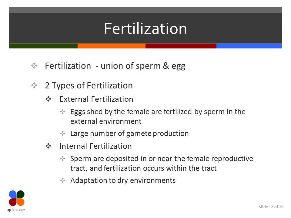 Slide 12 of 26 Fertilization  Fertilization - union of sperm & egg  2 Types of Fertilization  External Fertilization  Eggs shed by the female are