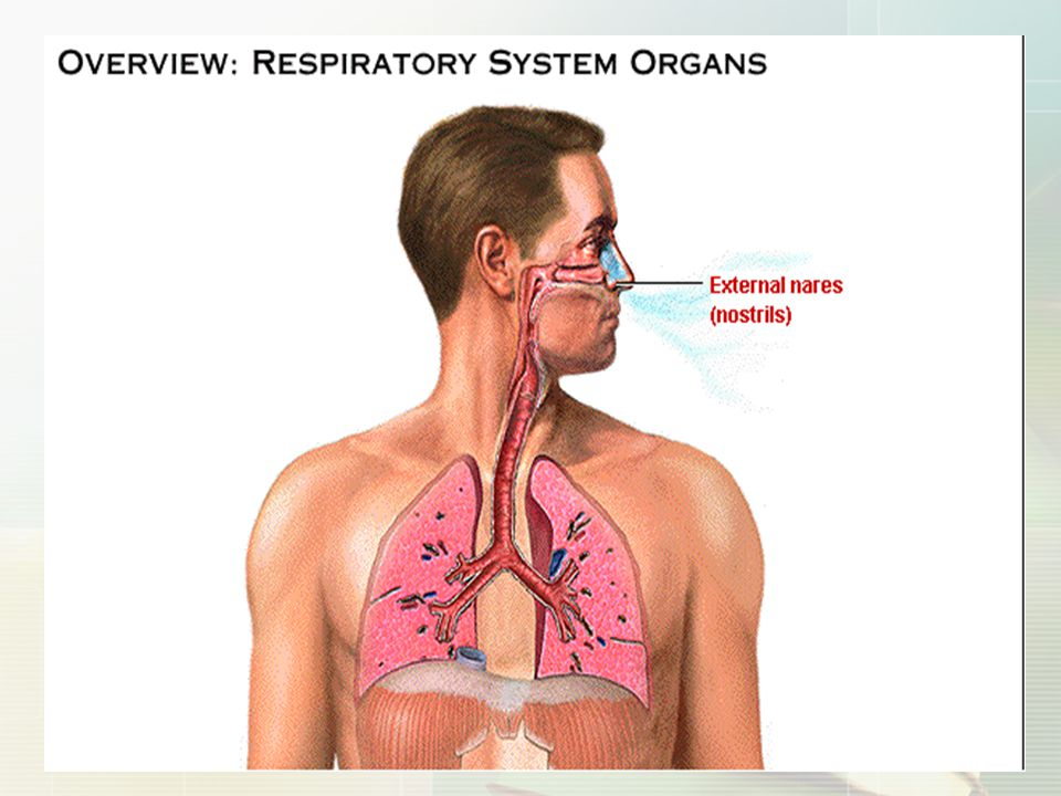 pulmonary consolidation,At electasis anatomical-like shunt increased of ▲ increased of anatomical-like shunt bronchiectasis anatomic shunt ↑ Pulmonary A-V shunt open↑ true shunt↑ Respiratory failure increased of anatomical shunt ▲ increased of anatomical shunt 3 ) increased of anatomical shunt Right-to-left shunts or anatomic shunt Right-to-left shunts or anatomic shunt
