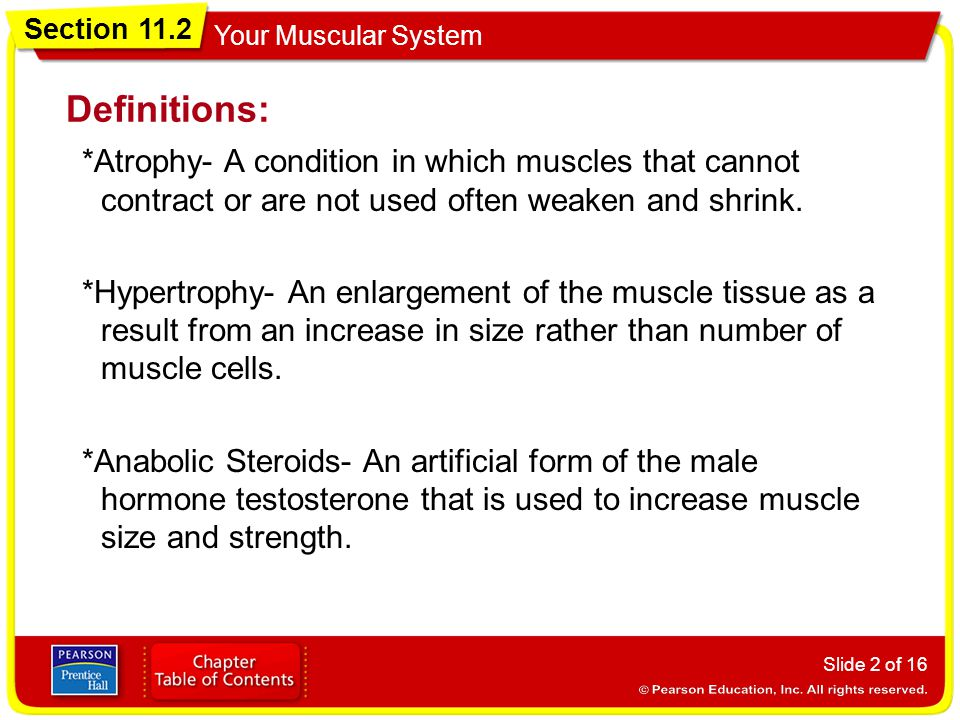 Section 11.2 Your Muscular System Definitions: *Atrophy- A condition in which muscles that cannot contract or are not used often weaken and shrink.