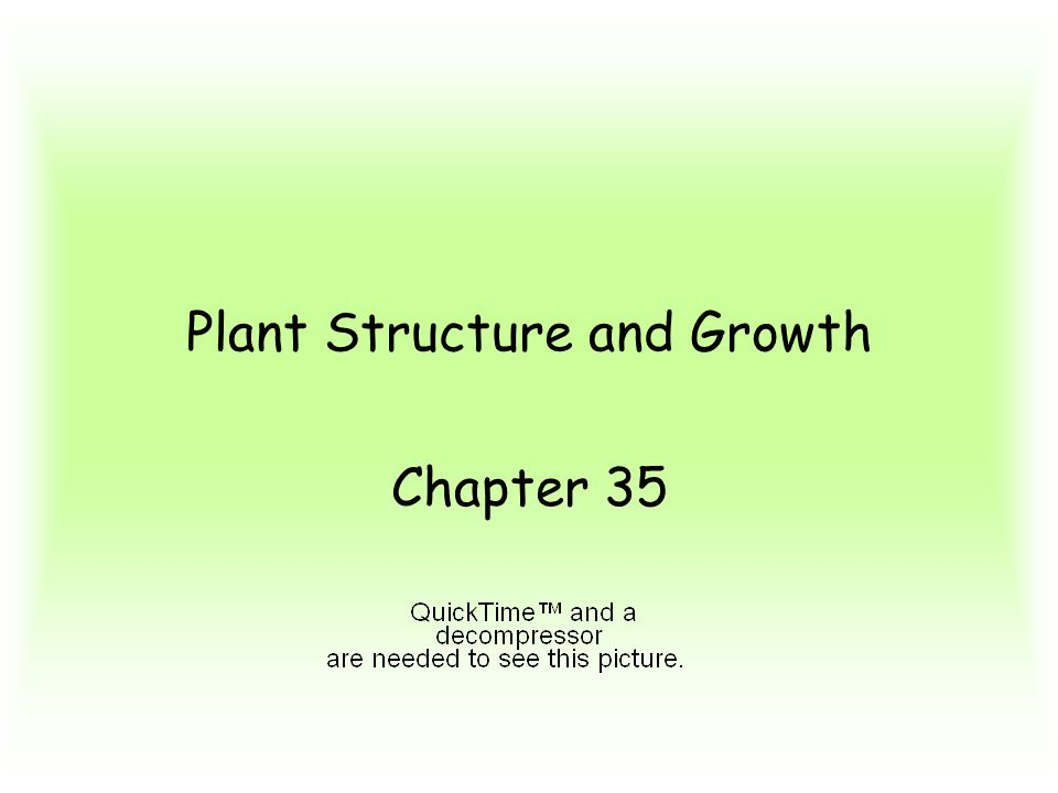 Plant Structure and Growth Chapter 35