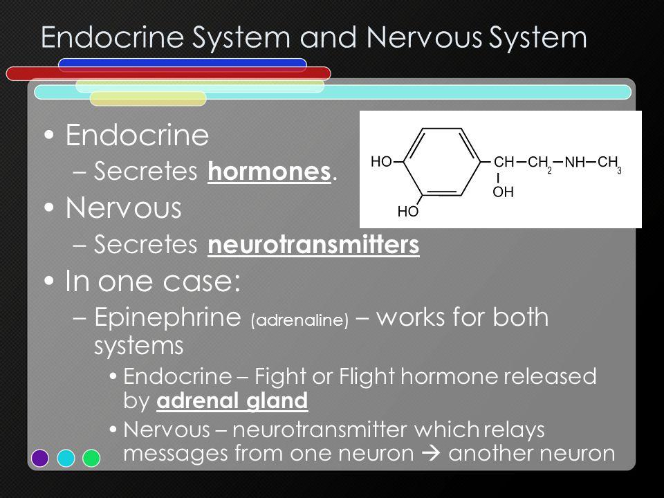 Endocrine System and Nervous System Endocrine –Secretes hormones. Nervous –Secretes neurotransmitters In one case: –Epinephrine (adrenaline) – works f