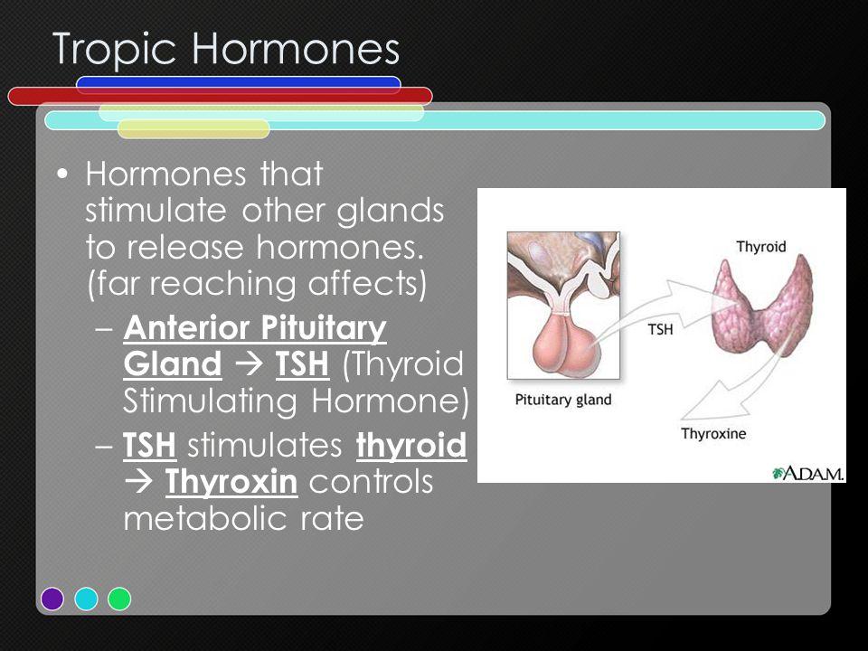 Tropic Hormones Hormones that stimulate other glands to release hormones.