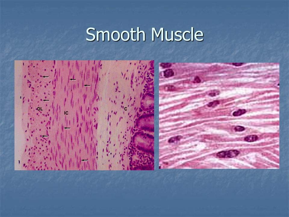 Motor unit: motor neuron (somatic nervous system) plus all of the muscle fibers it innervated.