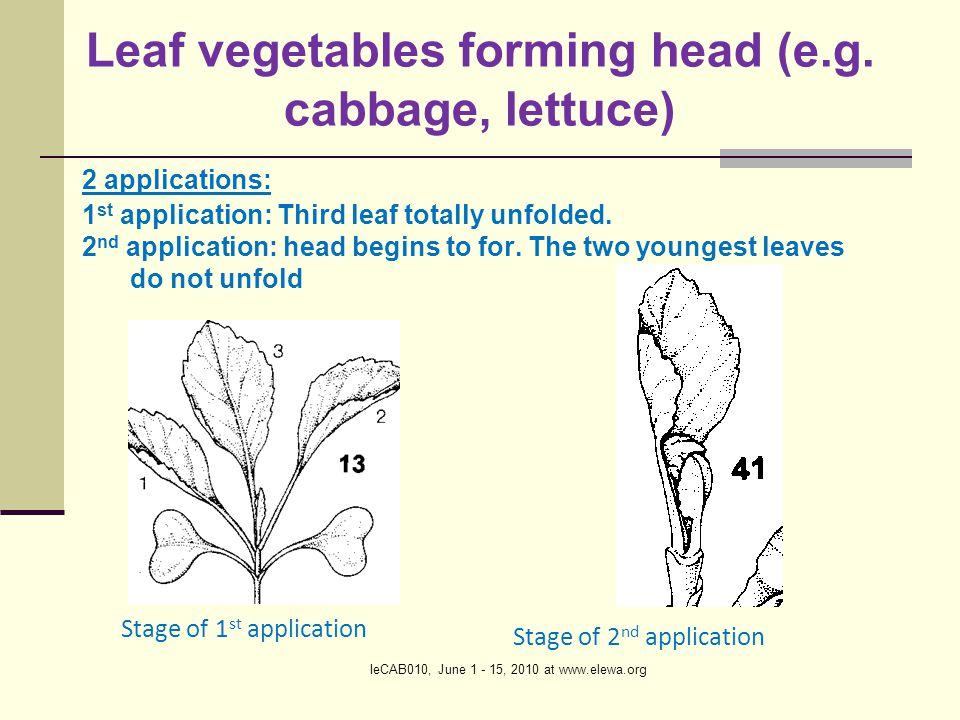 IeCAB010, June 1 - 15, 2010 at www.elewa.org Leaf vegetables forming head (e.g.